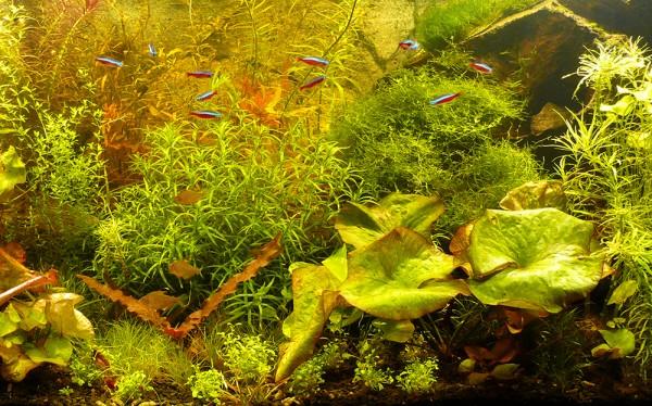 """10 verschiedene Bund Aquarium-Pflanzen """"Exotica""""-Sortierung, Raritäten"""