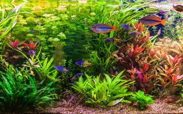 Aquarium-Pflanzenset 'Regenbogen' bis 200L