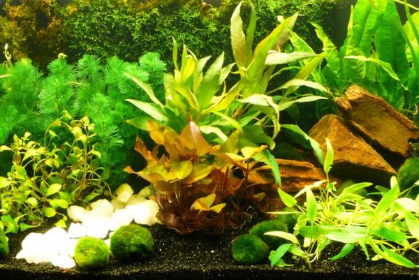"""Aquarium-Pflanzen-Set """"Sorgenfrei"""" 450L - Einfach+Schön"""