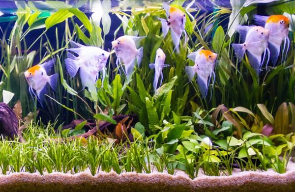Wasser-Pflanzen - Set 'Scalar' bis 300L