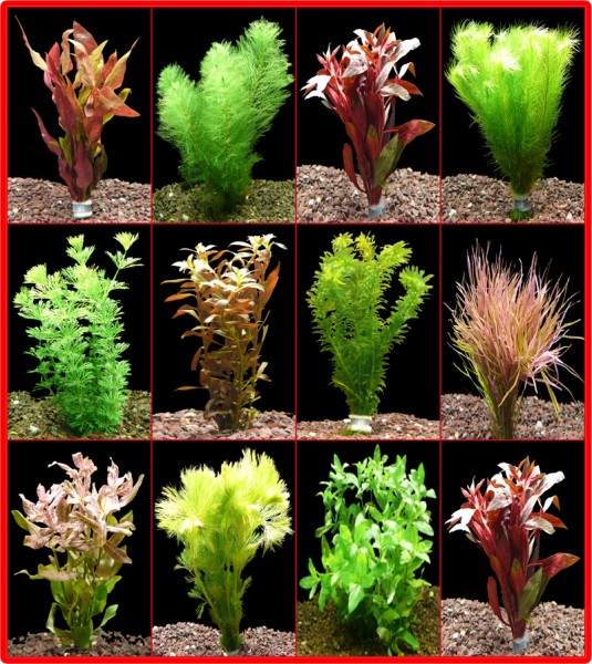 10 Bund Rote + 10 Bund Grüne Aquarienpflanzen - Top!!!