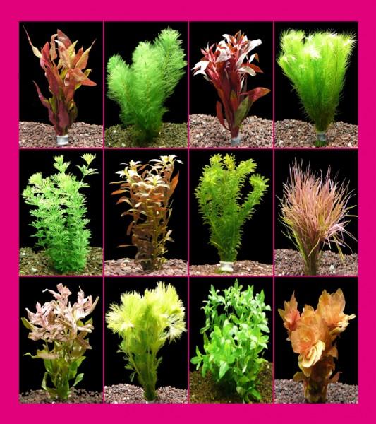 12 Bund Aquarienpflanzen + Javamoos - 1A-Qualität!!!