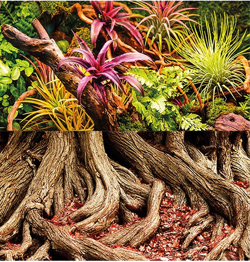 1m Rückwand-Folie 60cm hoch, Colorful Jungle / Strangler Fig #Nr. 32