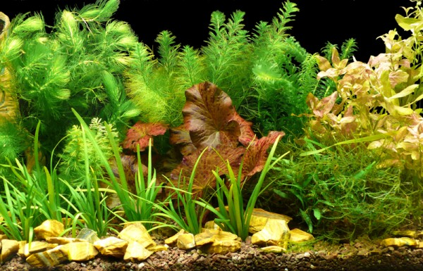 """Aquarienpflanzen - Set """"Wächst Immer"""" Bis 60L"""