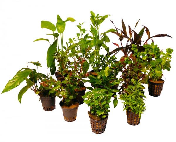 12 verschiedene Töpfe Aquarienpflanzen für 130l bis 150l Aquarium