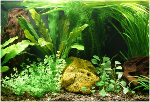 """Wasser-Pflanzen - Set """"Amerika"""" Bis 200L"""