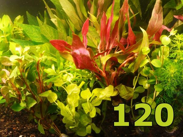 Angebot - 120 Einzelpflanzen - schönes buntes Sortiment