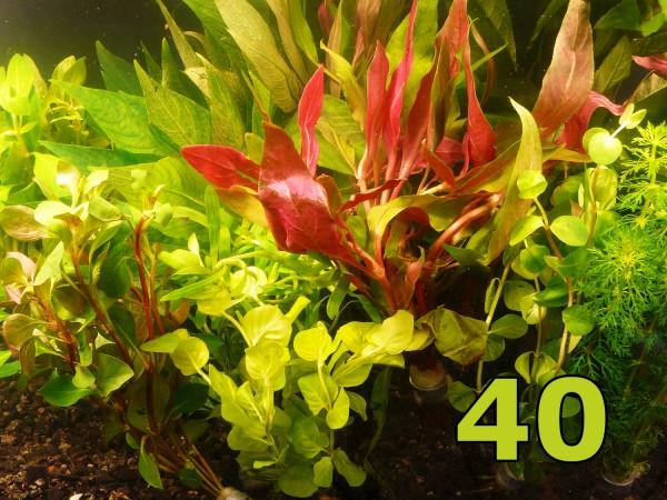 Angebot - 40 Einzelpflanzen - schönes buntes Sortiment
