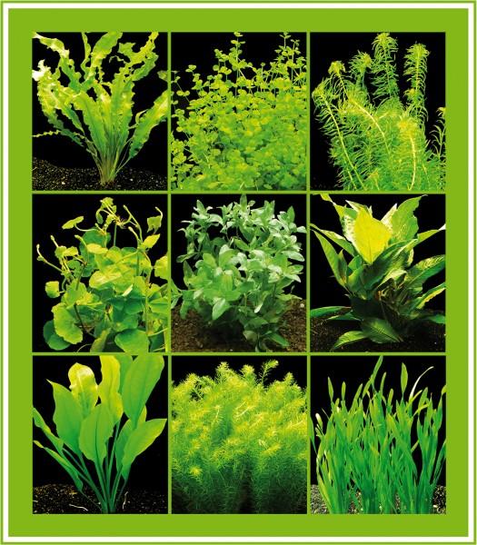 5 Bund grüne Wasserpflanzen, Aquarienpflanzen - einfach und schön