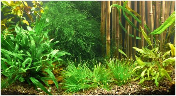 """Wasser-Pflanzen - Set """"Asien"""" Bis 60L"""