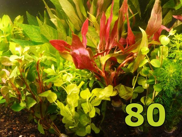 Angebot - 80 Einzelpflanzen - schönes buntes Sortiment