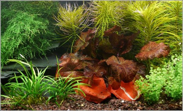 """Wasser-Pflanzen - Set """"Lotus"""" Bis 130L"""
