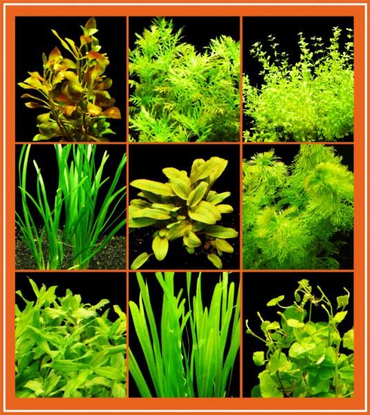 Easy-Set 2 - Einfach Zu Pflegende Aquarienpflanzen 60L